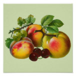 Vintage Peaches and Cherries Poster