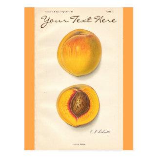 Vintage Peaches Postcard