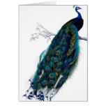 Vintage Peacock Cards