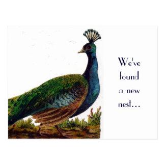 Vintage Peacock Change of Address Postcard