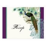 Vintage Peacock, Feathers - RSVP Response Postcard