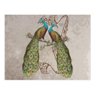 Vintage Peacock Grunge Damask Love Birds Postcard