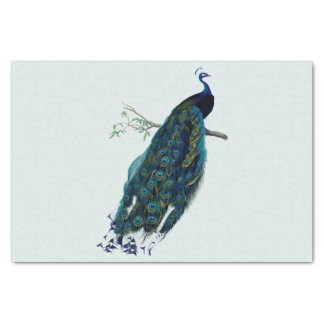 Vintage Peacock Illustration Tissue Paper