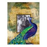 Vintage Peacock in Paris Frame Post Card