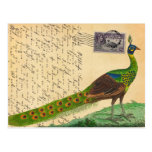 Vintage Peacock Letter with Stamp & Postmark