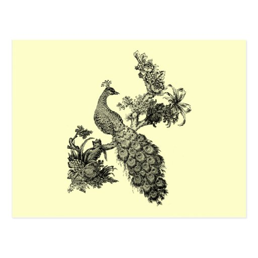 Vintage Peacock on Branch T-shirts and Gifts Post Card