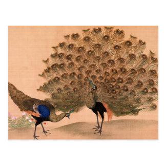 Vintage Peacock Postcard