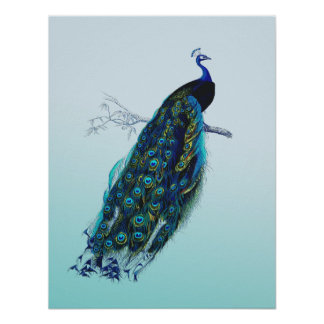 Vintage Peacock Poster