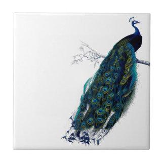Vintage Peacock Tile