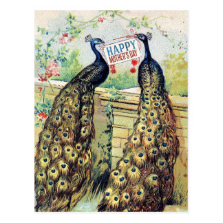 Vintage Peacocks - Happy Mother's Day Postcard
