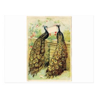 Vintage Peacocks Postcard