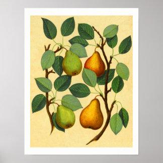 Vintage Pears v.2 Poster