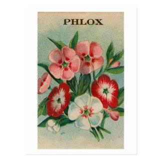vintage phlox seed packet postcard