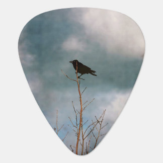 Vintage photograph of a crow in a tree plectrum
