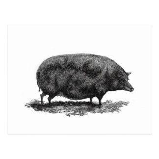 Vintage pig etching card