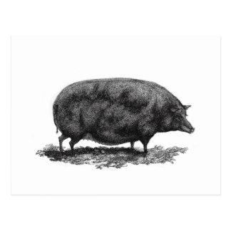 Vintage pig etching card postcard