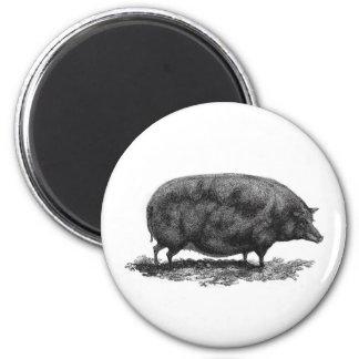 Vintage pig etching magnet