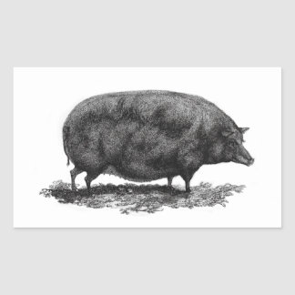 Vintage pig etching sticker