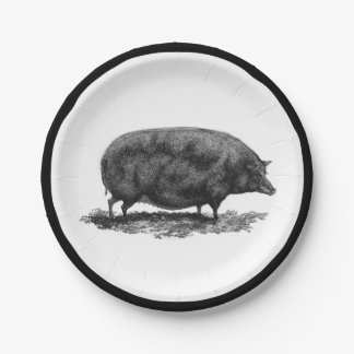 Vintage pig etching with border paper plate 7 inch paper plate