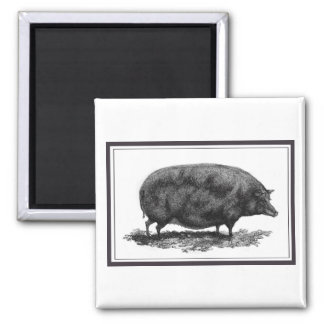 Vintage pig etching with borders magnet