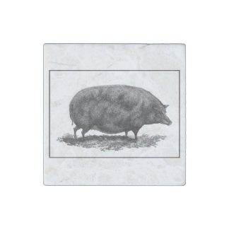 Vintage pig etching with borders magnet stone magnet