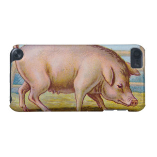 Vintage Pig Illustration iPod Touch (5th Generation) Cases