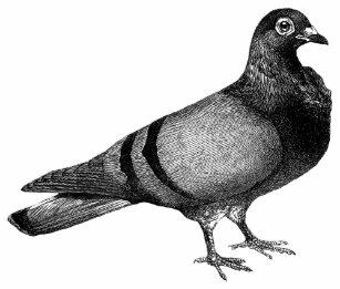 Vintage Pigeon gifts Coffee Mug