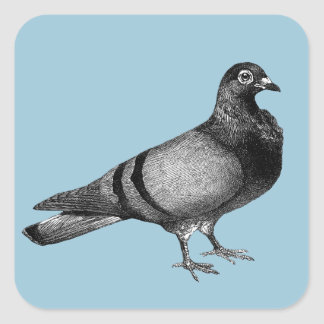 Vintage Pigeon gifts Square Sticker