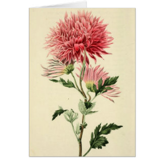Vintage Pink Chrysanthemum Flower Card