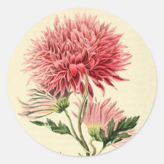 Vintage Pink Chrysanthemum Flower Round Sticker