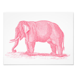 Vintage Pink Elephant 1800s Elephants Illustration Photographic Print