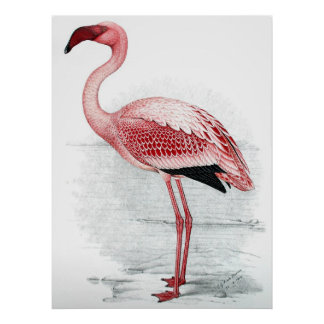 Vintage Pink Flamingo Painting Poster