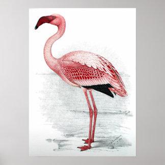 Vintage Pink Flamingo Poster