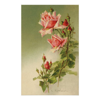 Vintage Pink Garden Roses for Valentine's Day Poster