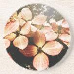 Vintage Pink Kousa Dogwood Flower Blossom Beverage Coaster