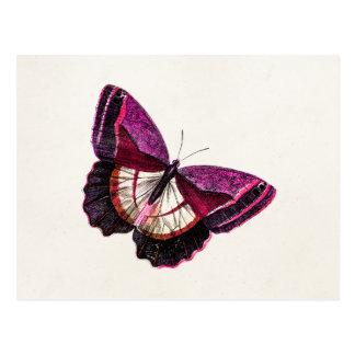 Vintage Pink Red Butterfly 1896 Blank Template Postcard