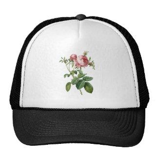 Vintage pink rose botanical illustration, Redoute Mesh Hat