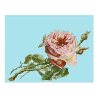 Vintage Pink Rose on Pale Aqua Postcard