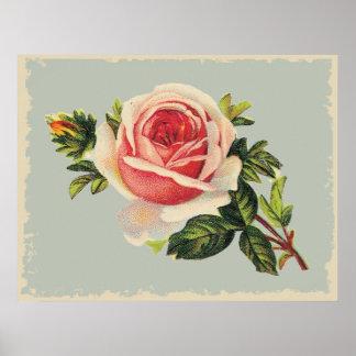 Vintage Pink Rose Poster