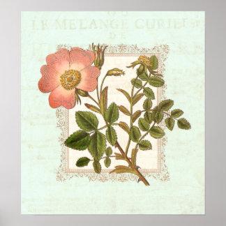 Vintage Pink Rose Shabby Elegance Poster