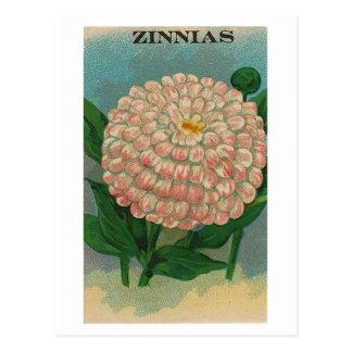 vintage pink zinnia seed packet postcard