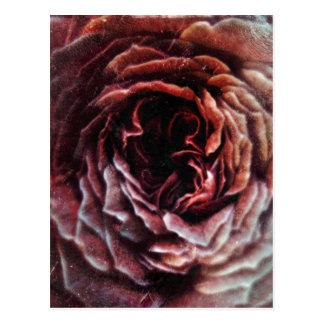 Vintage Pinkness Postcard