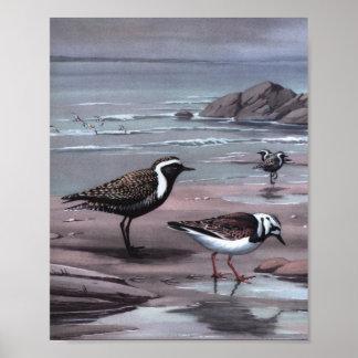 Vintage Plover Bird Art Poster