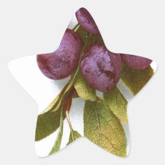 Vintage Plum Botanical Print Star Sticker