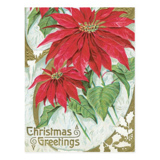 Vintage Poinsettia Illustration Postcard