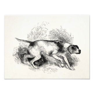 Vintage Pointer Hunting Dog 1800s Pointers Dogs Art Photo