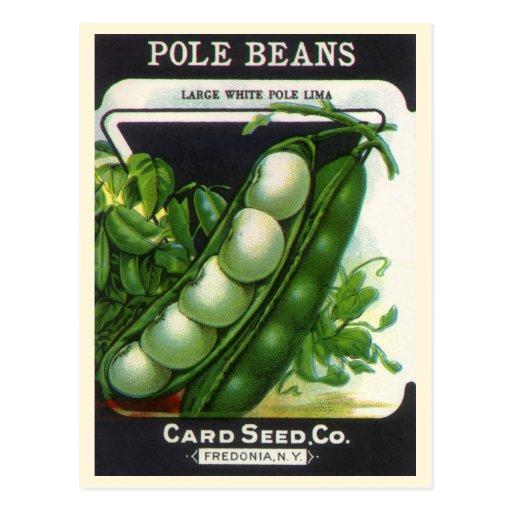 Vintage Pole Lima Beans Seed Packet Label Art Postcard