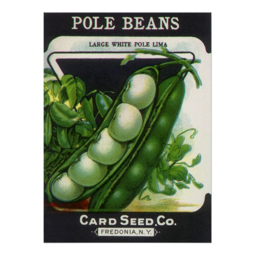 Vintage Pole Lima Beans Seed Packet Label Art Poster
