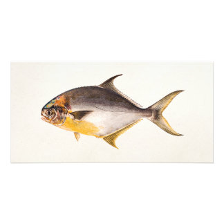 Vintage Pompano Fish- Game Fishes Template Blank Customised Photo Card
