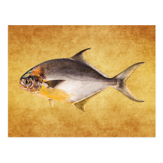 Vintage Pompano Fish- Game Fishes Template Blank Postcard